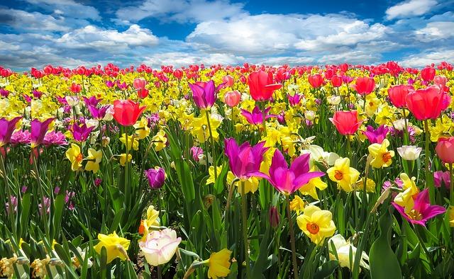 Kadınların Sevdiği Çiçekler Nelerdir?