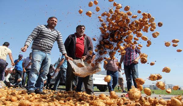 Patates Üreticileri İsyan Etti