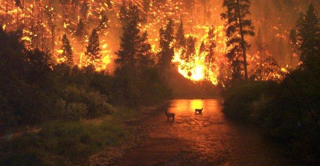California Yangını Durmak Bilmiyor!