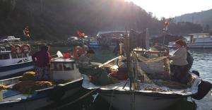 Karadeniz'de 14 Yeni Balık Türü Görüldü
